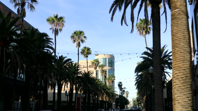 anaheim palm trees - anaheim california stock videos & royalty-free footage
