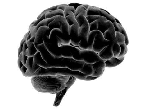 analisi del cervello umano-grigio - cerebrum video stock e b–roll