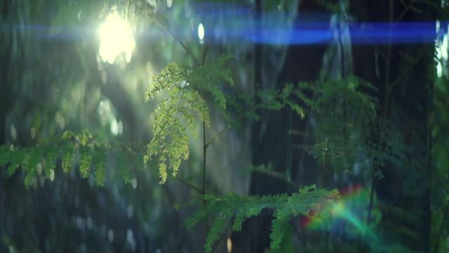 vidéos et rushes de effet lentille anamorphique. la forêt dans le brouillard du matin et le faisceau du soleil. - anamorphose