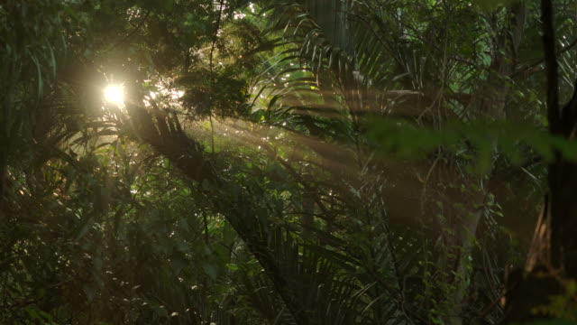 anamorphic lens effect. the forest in the morning fog and the beam from the sun. - light beam stock videos & royalty-free footage