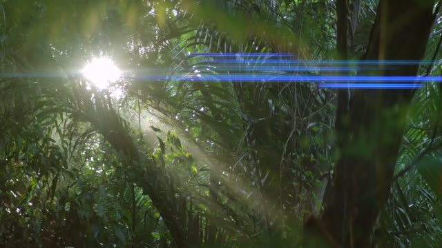 anamorphic lens effect. the forest in the morning fog and the beam from the sun. - anamorphic stock videos & royalty-free footage