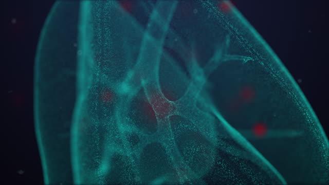 anatomy of respiratory system parts - covid19- coronavirus - trachea stock videos & royalty-free footage