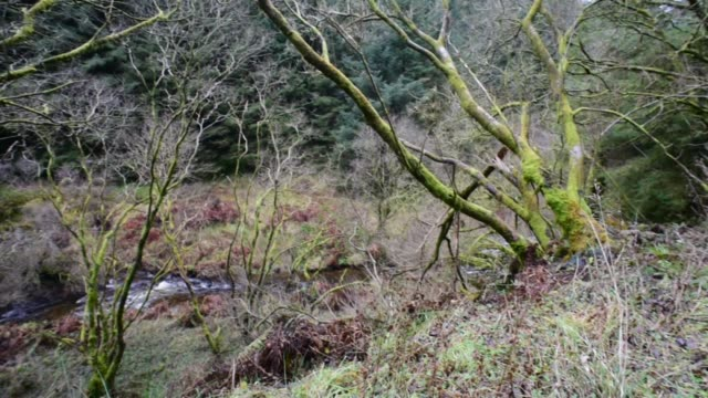 ancient deciduous woodland in scotland. - david johnson stock videos & royalty-free footage