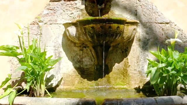 古代の庭園も - オランダカイウユリ点の映像素材/bロール