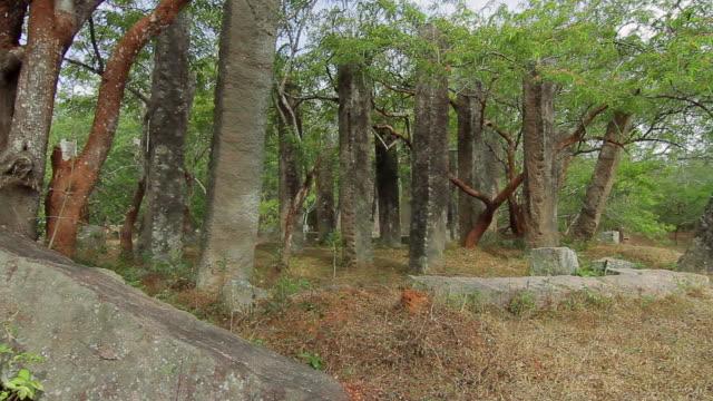 ms pan ancient overgrown, unnamed ruins near mirisavatiya dagoba / anuradhapura, north central province, sri lanka - sri lankan culture stock videos & royalty-free footage