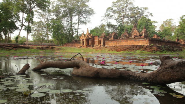 ws ancient temple with pond in foreground / angkor wat, siem reap, cambodia - water plant stock videos and b-roll footage