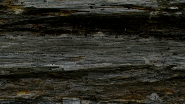 WOODEN BACKGROUND : ancient timber wall - LOOP