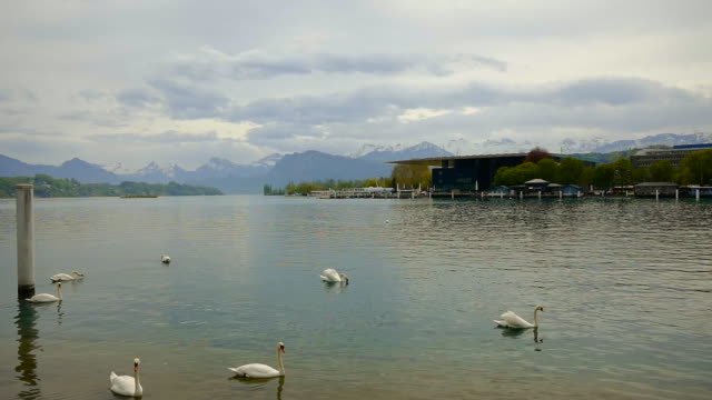 KKL and Culture and Convention Center Lucerne and Lake with Swan and Mountain in Switzerland