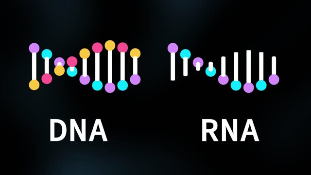 rna and dna strand molecule 3d model animation - rna stock videos & royalty-free footage