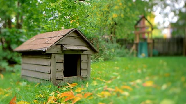 dolly in and dolly out of empty dog house in backyard - käfig stock-videos und b-roll-filmmaterial