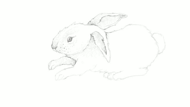 and drawn of autumn bunny rabbit video clip - animal drawn stock videos & royalty-free footage