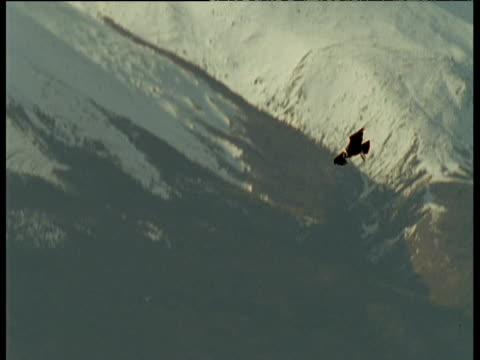 andean condor glides down among mountain peaks - south america stock videos & royalty-free footage