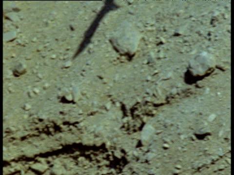 andean condor shadow glides over arid rocky coast - 空気力学点の映像素材/bロール