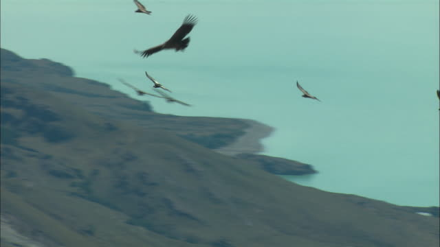 ms, pan, andean condors (vultur gryphus) flying over mountains, patagonia, argentina - argentina stock videos & royalty-free footage