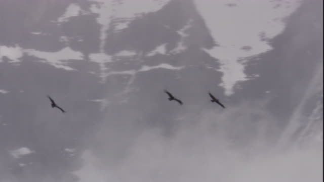 andean condors soar over mountains, chile. available in hd. - rovfågel bildbanksvideor och videomaterial från bakom kulisserna