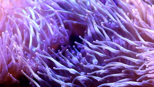 anemone flower of sea. - sea anemone stock videos & royalty-free footage