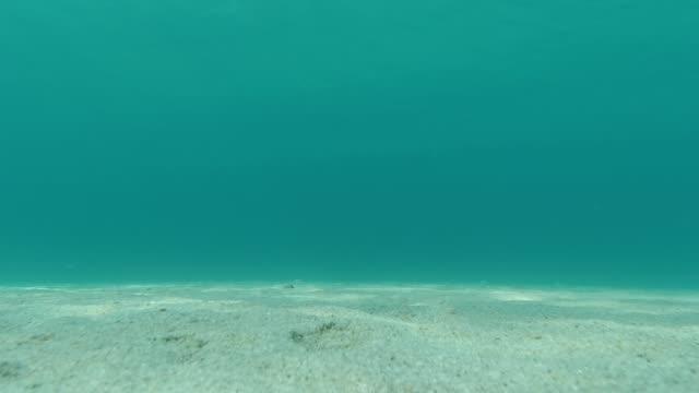 anemone auf der sandmeerperle - unterer teil stock-videos und b-roll-filmmaterial