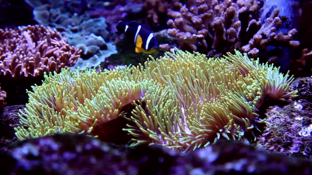 anemone waving - sea anemone stock videos & royalty-free footage