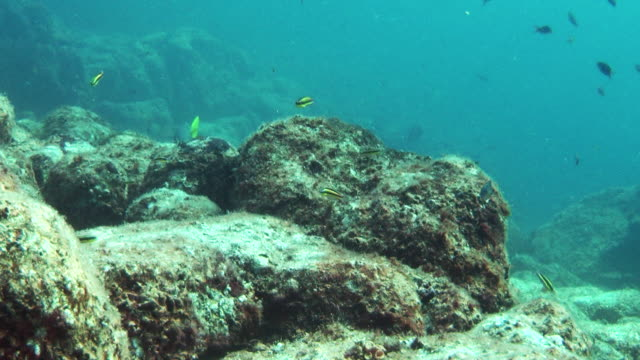angel fish and other small fish swim along a rocky seabed. - futter suchen stock-videos und b-roll-filmmaterial