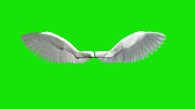 angel wings medium high speed flapping loopable - animal wing stock videos & royalty-free footage