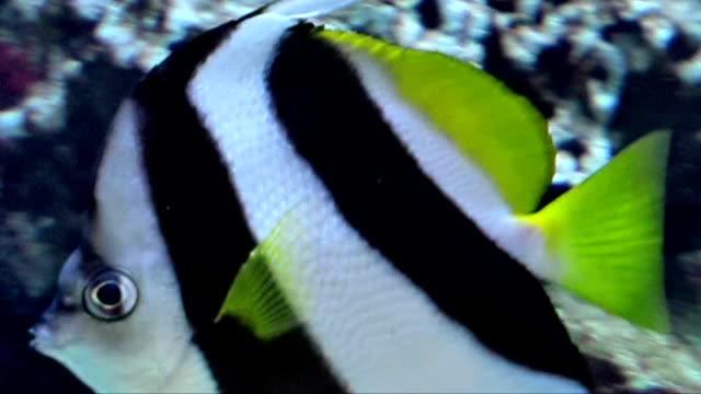 angelfish - エンゼルフィッシュ点の映像素材/bロール