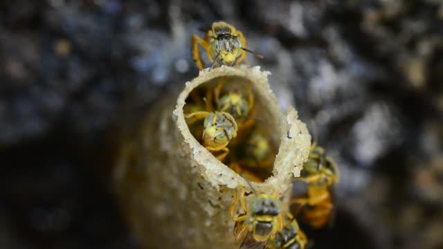 angelita bees. - animal creation stock videos & royalty-free footage