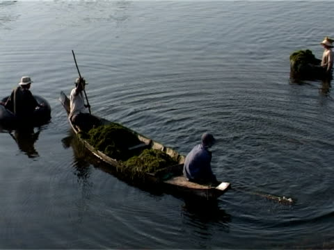 カンボジアのアンコールワット、同僚にカヌー - 海草点の映像素材/bロール