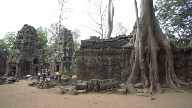 angkor wat - ta prohm - cambodia stock videos and b-roll footage