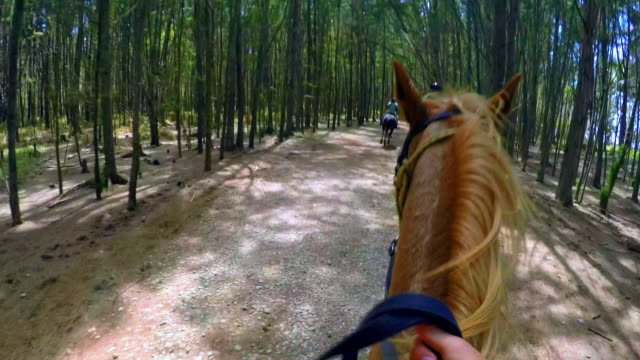 pov angle of a girl galloping on a horse - turtle bay hawaii stock videos & royalty-free footage