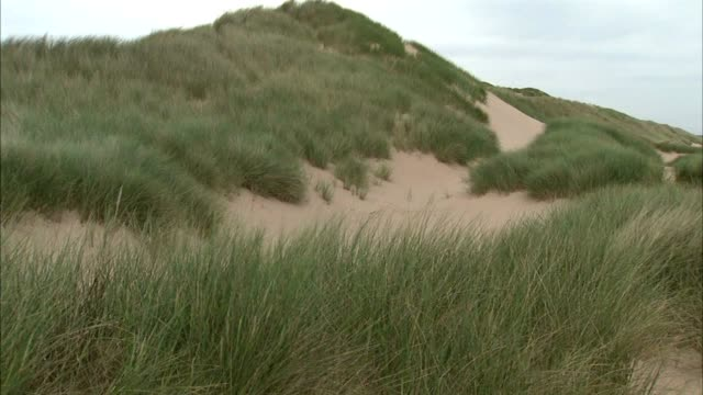 angled ws dunes protected w/ marram grass pan beachfront dunes ws dune w/ sea grass protecting sand dune stable grass more dunes bg no people sites... - marram grass stock videos & royalty-free footage