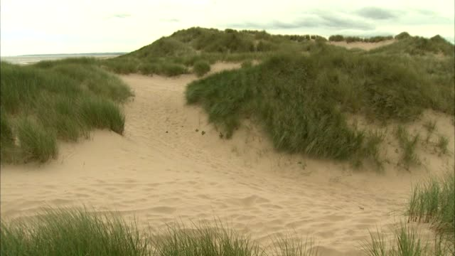angled ws edge of sand dunes w/ marram grass fg stable grass beyond pan dunes no people sites of special scientific interest protected scottish... - marram grass stock videos and b-roll footage