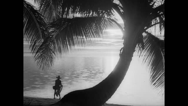 vídeos de stock, filmes e b-roll de angled ocean waves onto pebble covered beach. cliff top palm trees & pacific ocean waves lapping shore below, rocky coastline. tropical sunset:... - 1951