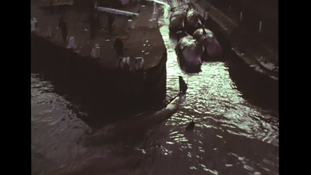 angled ship leaving durban harbor, docks w/ dead whales floating in water. whales on flatbed cargo train cars pulling into factory yard, vs men... - wet wet wet stock videos & royalty-free footage