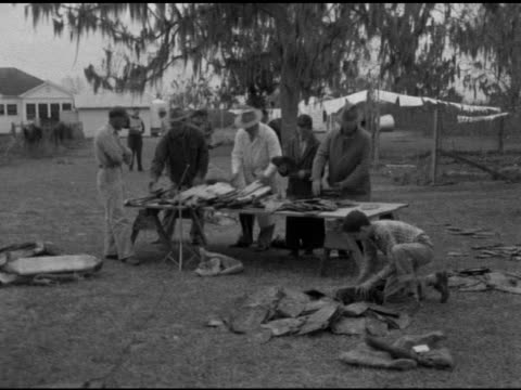 angled ws unidentified men one in white coat sorting raw hides off table sot giving size number grade to stiff unidentified animals pelts teenage... - festival internazionale del cinema di toronto video stock e b–roll