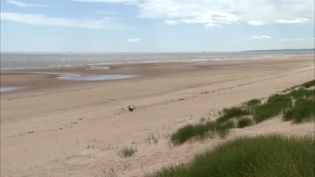 angled xws beach dunes covered in marram grass fg pan beach no people protected sites of special scientific interest seaside award - marram grass stock videos and b-roll footage