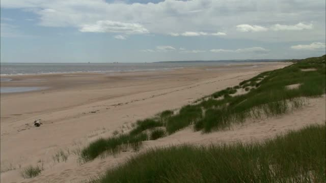 angled xws beach dunes covered in marram grass fg pan / reverse pan beach no people protected sites of special scientific interest seaside award - marram grass stock videos and b-roll footage