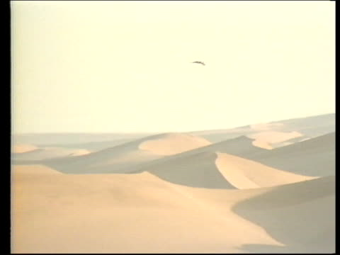 Angola Peace Talks EXT NAMIBIA LMS Desert hawk in flight above sand dunes PAN RL and TILT UP desert Army RatelFSV 90's in procession as SAAF...
