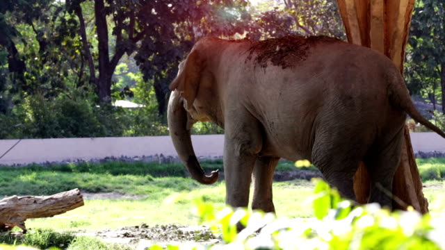 angry elephant in the zoo during springtime - animal behaviour stock videos & royalty-free footage
