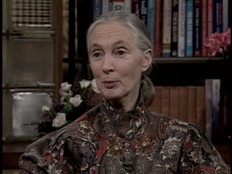 vidéos et rushes de animal behaviorist jane goodall talks about an upcoming television special about animals. - s'adapter