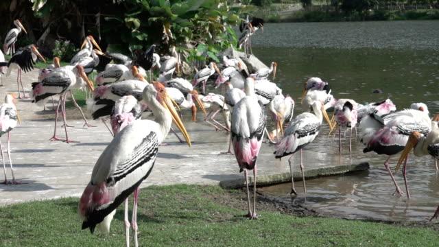 HD: Tiere Vogel im zoo