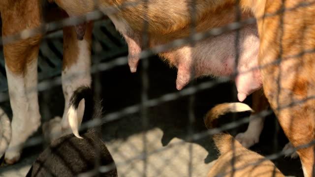 animal breasts - animal leg stock videos & royalty-free footage