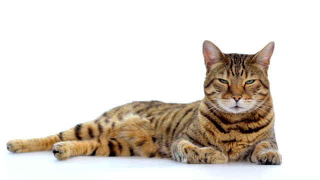 animal cinemagraph (photo in motion) cat opening eyes - tranquil scene stock videos & royalty-free footage
