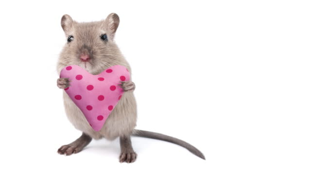 animal cinemagraphs - gerbil handing over a heart shaped cushion - cinematography stock videos & royalty-free footage