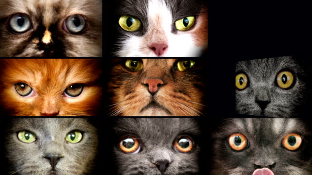 animal eyes - domestic animals stock videos & royalty-free footage