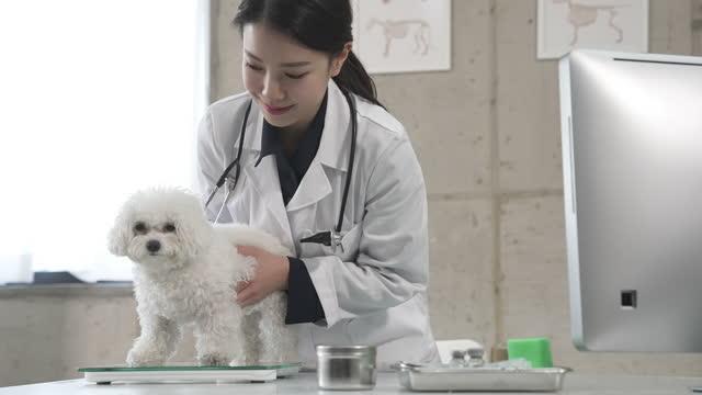animal hospital - vet examining puppy - 体重計点の映像素材/bロール