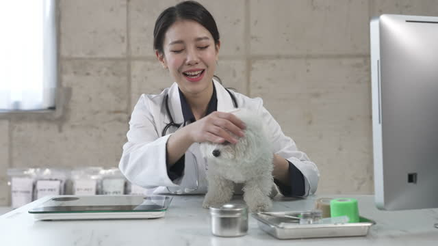 animal hospital - vet looking at puppy and smiling - 体重計点の映像素材/bロール