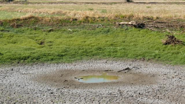vídeos y material grabado en eventos de stock de vida animal en el último estanque pequeño en el árido. - paisaje árido