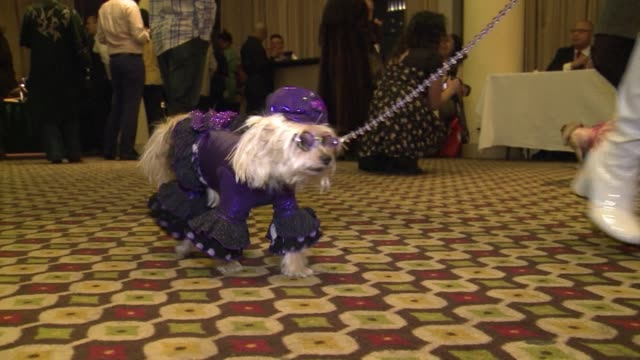Animal lovers dress up their dogs to take part in a Pet Fashion Show in New York