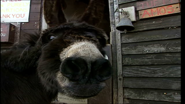 animal sanctuary in essex under threat as tesco plan to sell land hopefield animal sanctuary goose donkey sniffing at camera goat goat in pen - 脅し点の映像素材/bロール