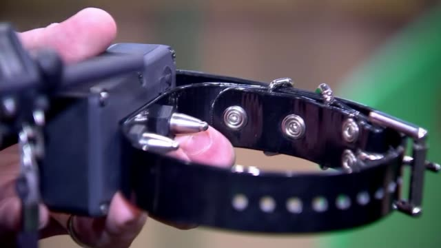 animal shock collars set to be banned in england nec birmingham 2018 crufts dog show int reporter to camera/ close shot of 'shock collar' in... - collar stock videos & royalty-free footage